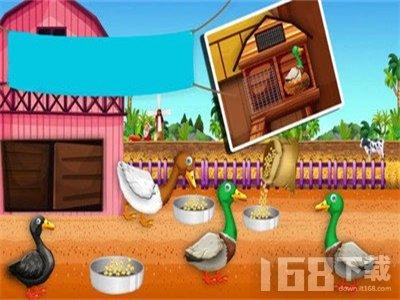 鸭农场养殖