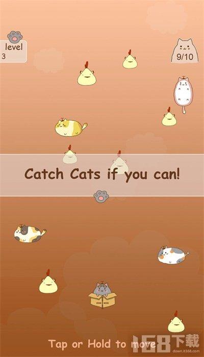 抓住流浪猫
