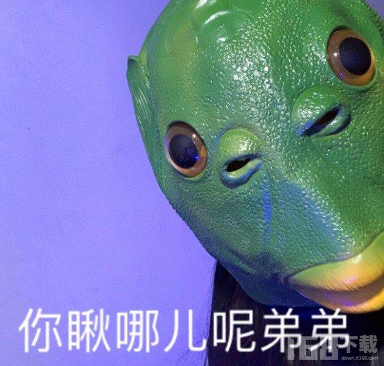 绿头鱼头像