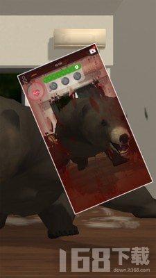 养只大灰熊