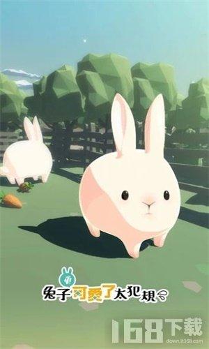 兔子太可爱了2