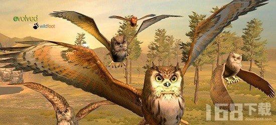 猫头鹰家族