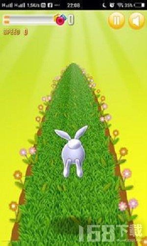 兔子疯狂奔跑